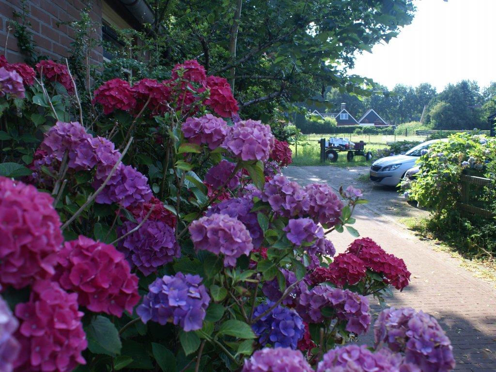 Bloemen rond de boerderij