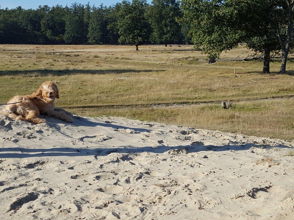 Honden zijn bij ''Onder de Eiken'' toegestaan!